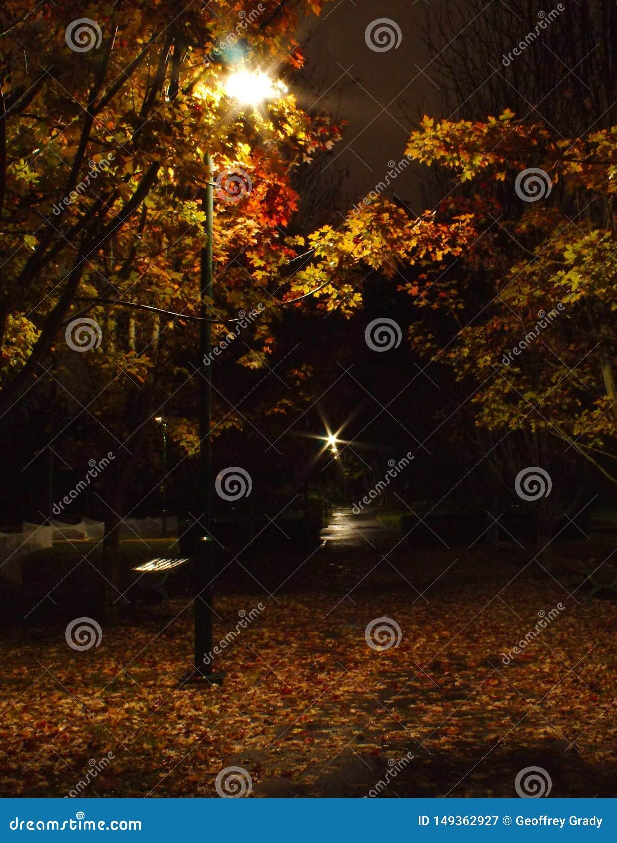 Δέντρα φθινοπώρου σε ένα πάρκο πρόωρη νύχτα