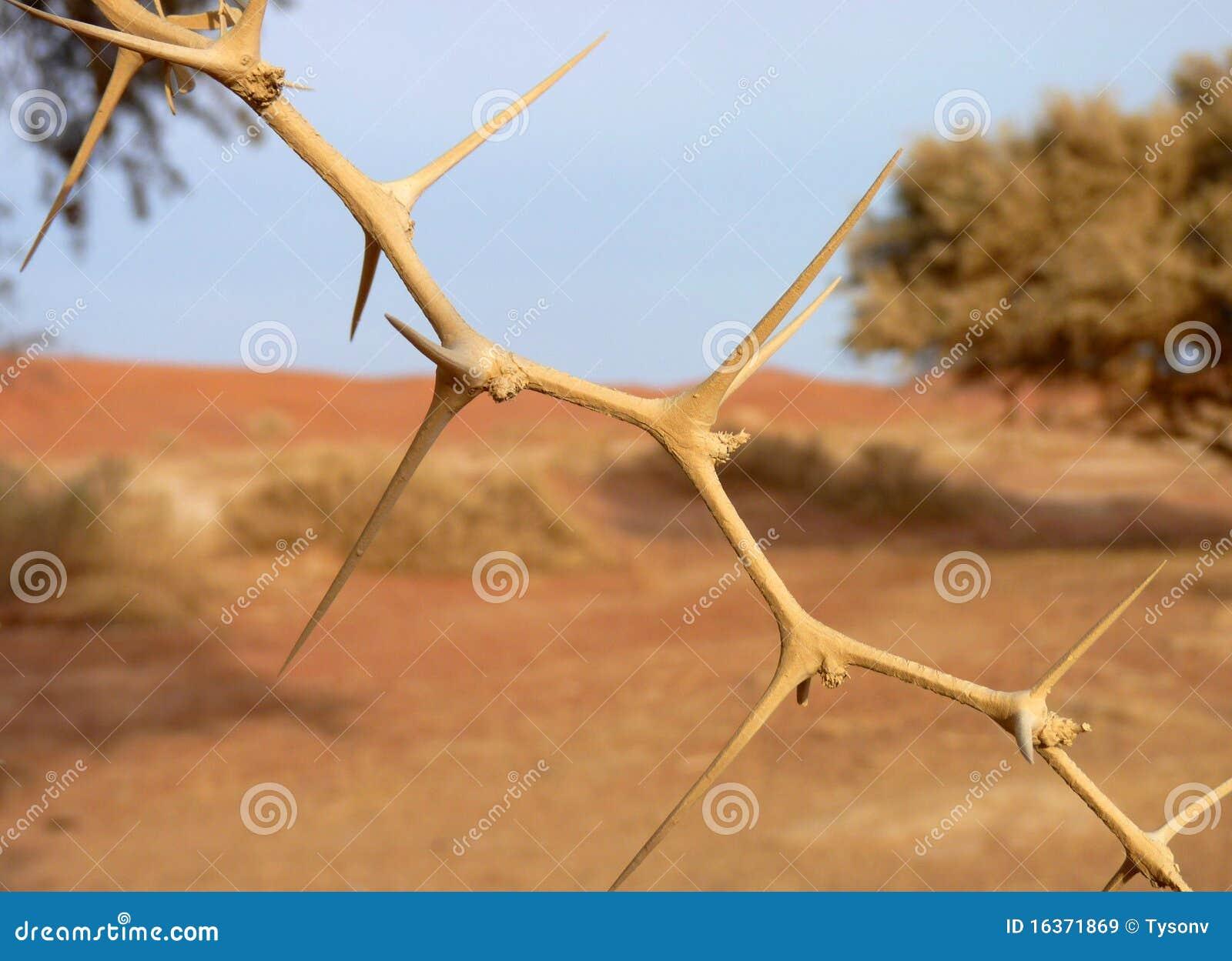 δέντρο ακακιών