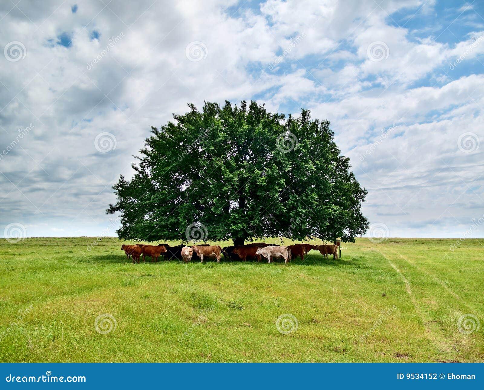 δέντρο βοοειδών κάτω