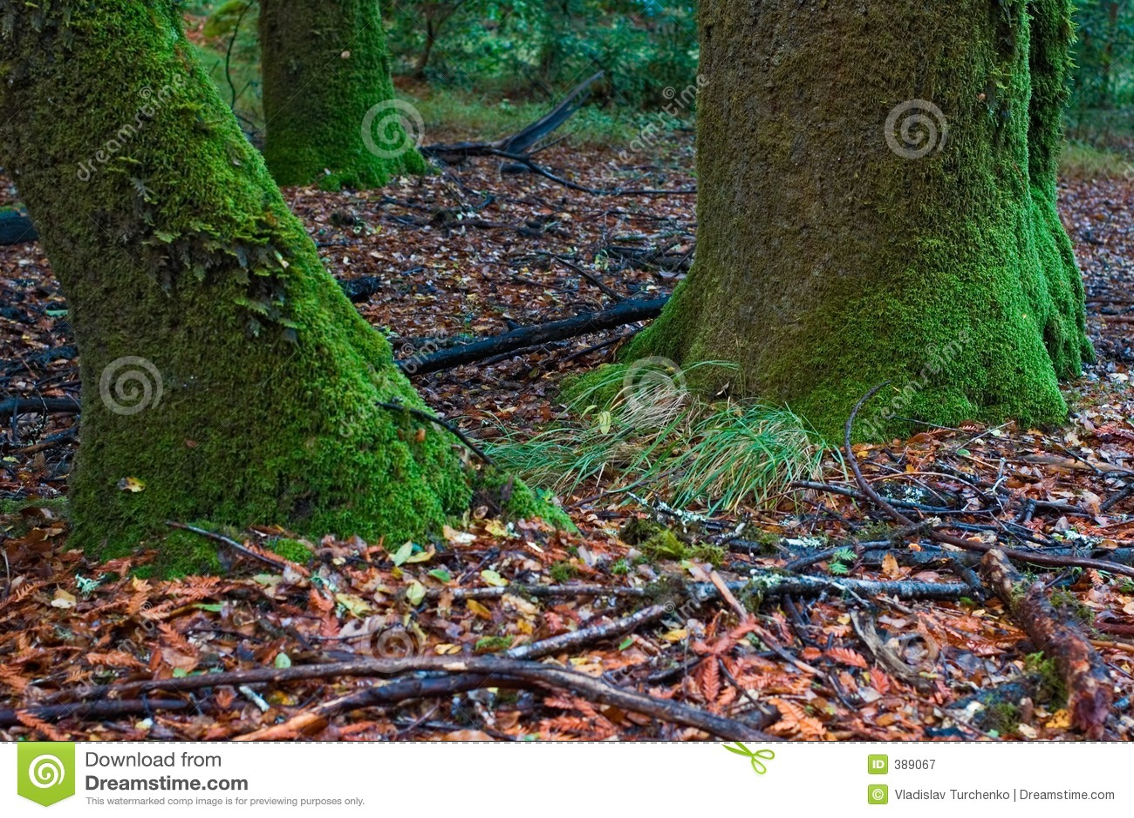 δέντρο βρύου