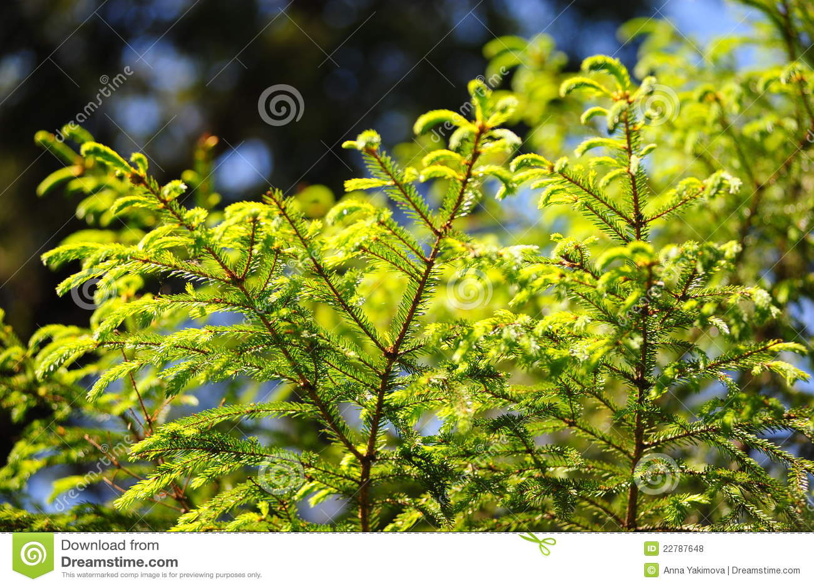 δέντρο γουνών