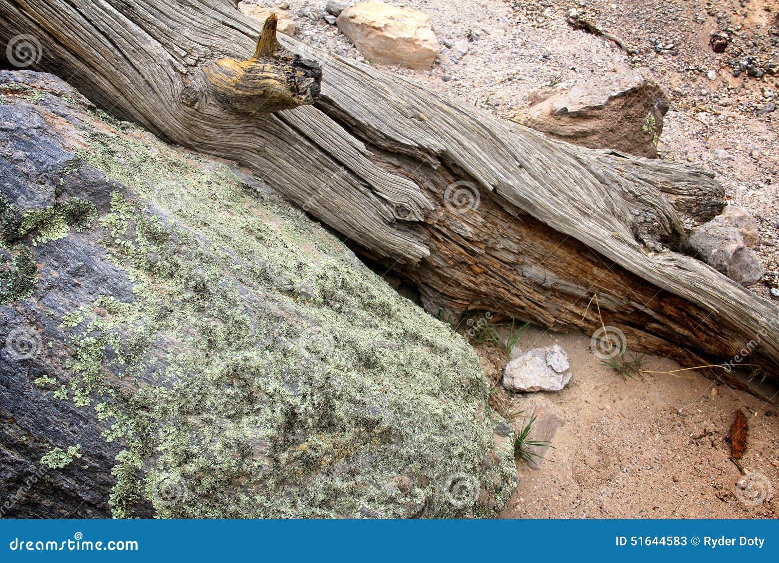 Δέντρο ερήμων και βράχος βρύου