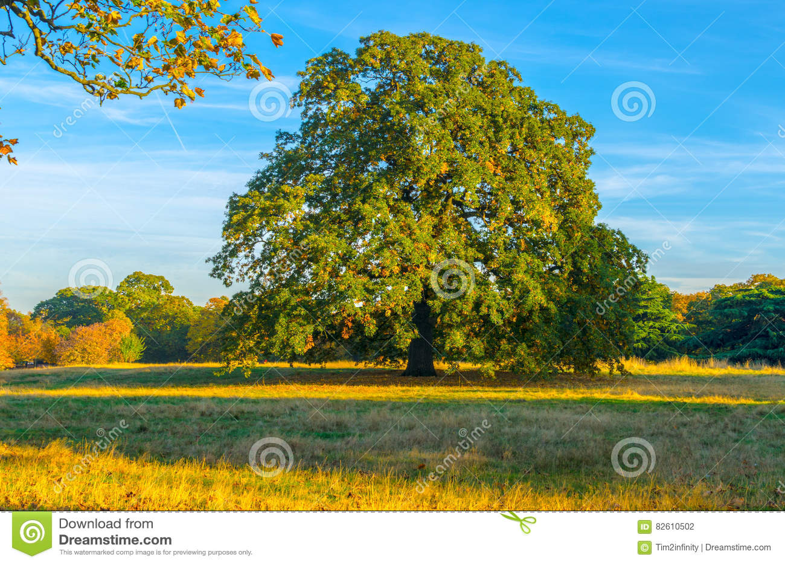 Δέντρο κάστανων σε ένα δασόβιο πάρκο το φθινόπωρο
