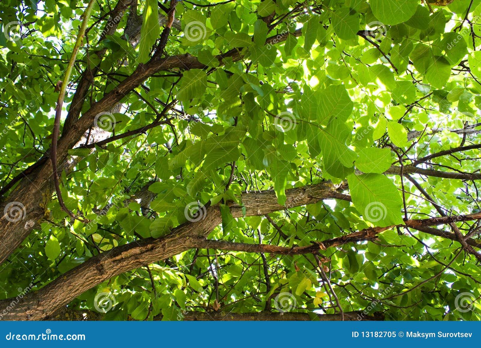 δέντρο κάτω