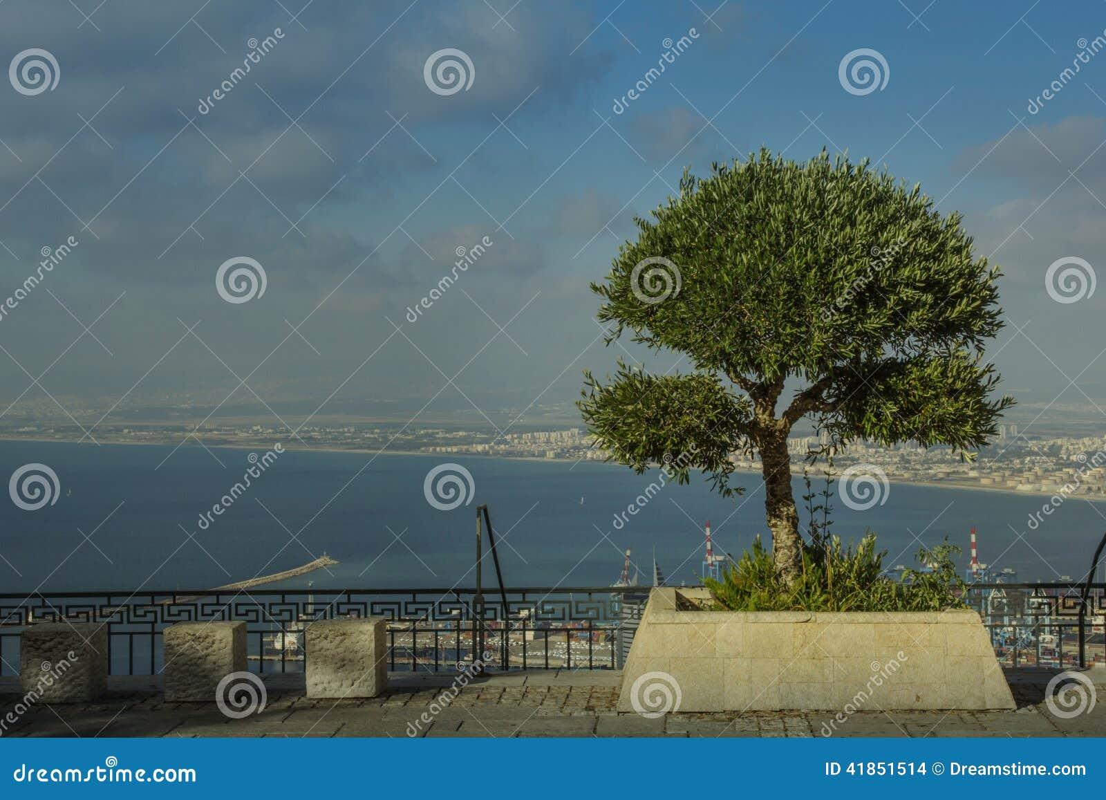 Δέντρο και θάλασσα
