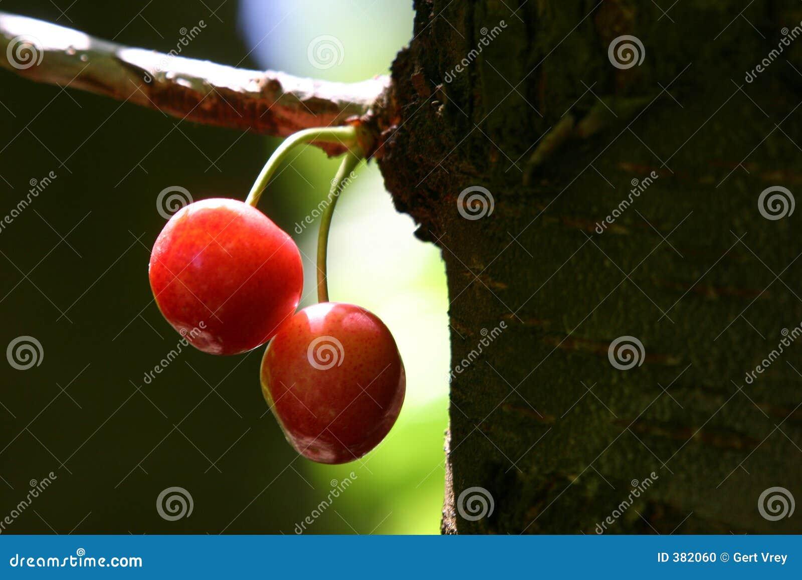 δέντρο κερασιών