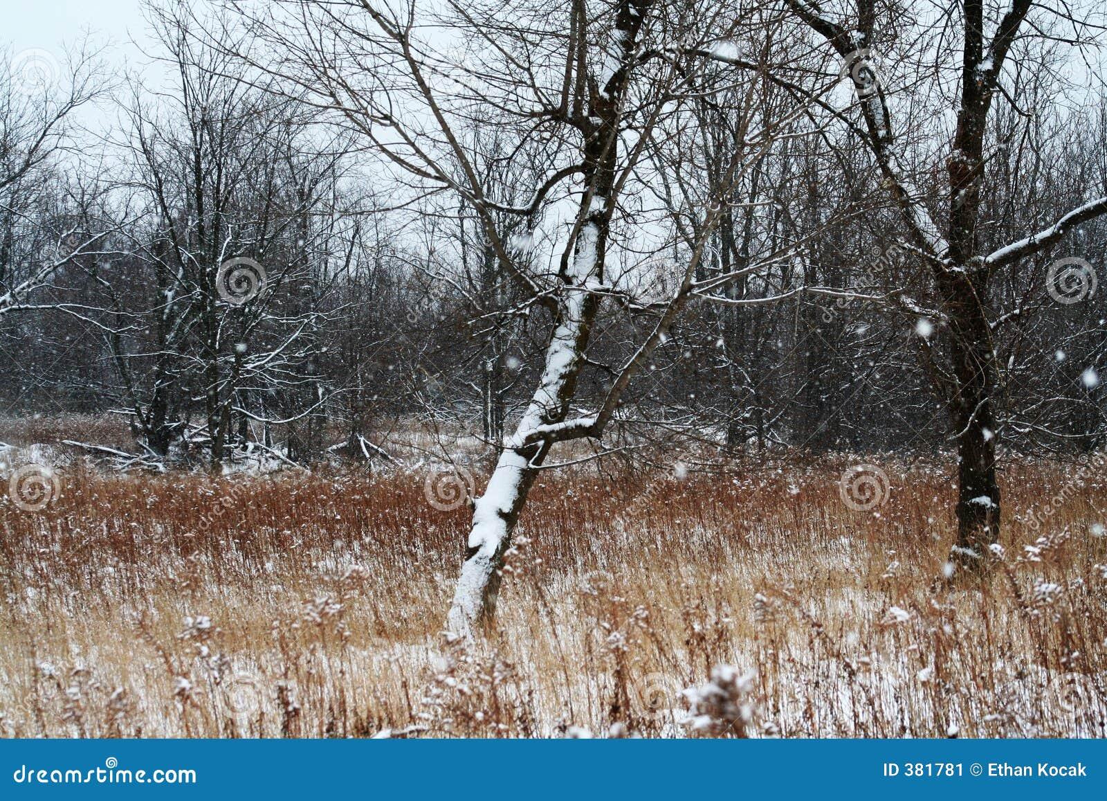 δέντρο λιβαδιών