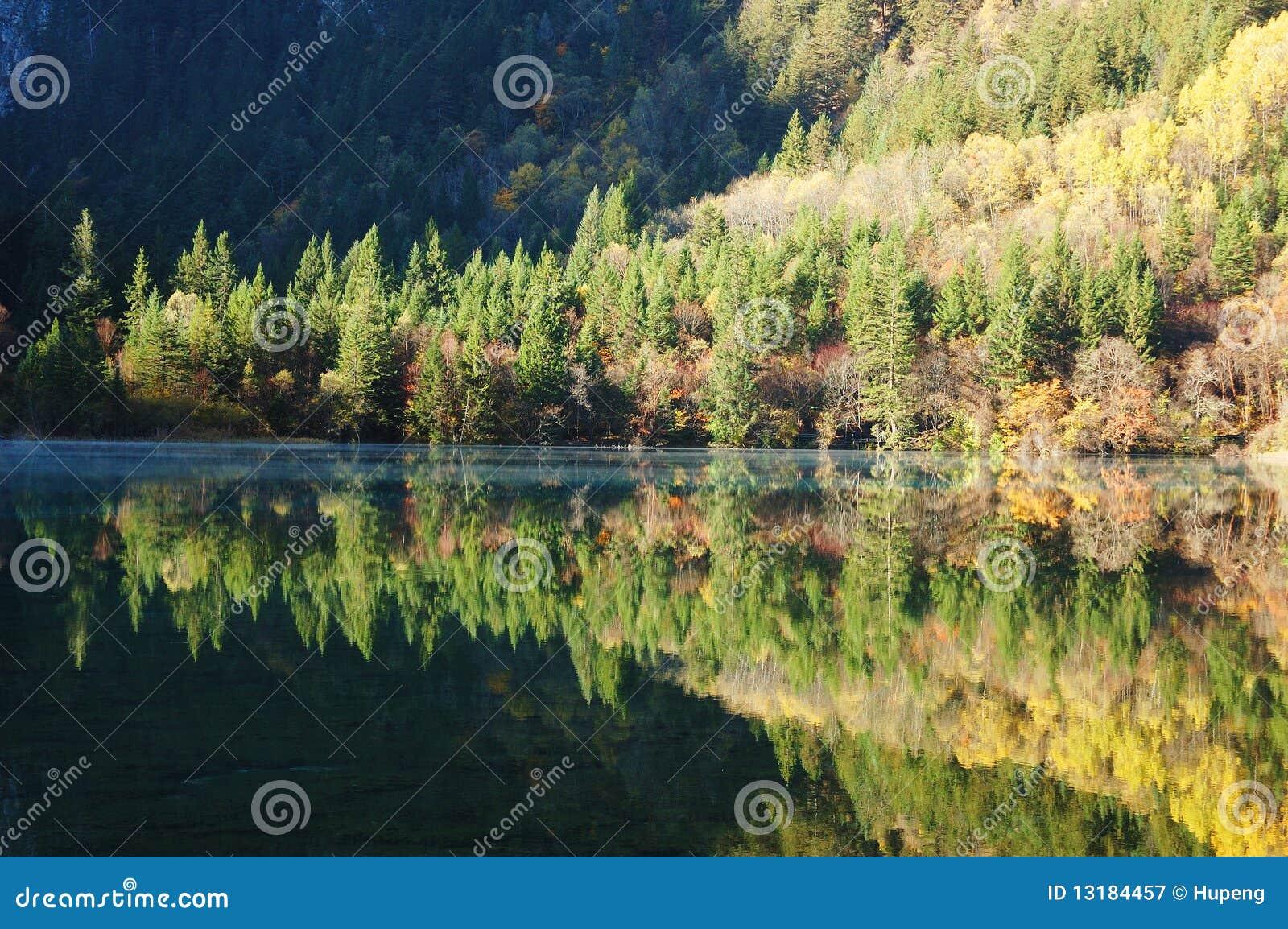 δέντρο λιμνών
