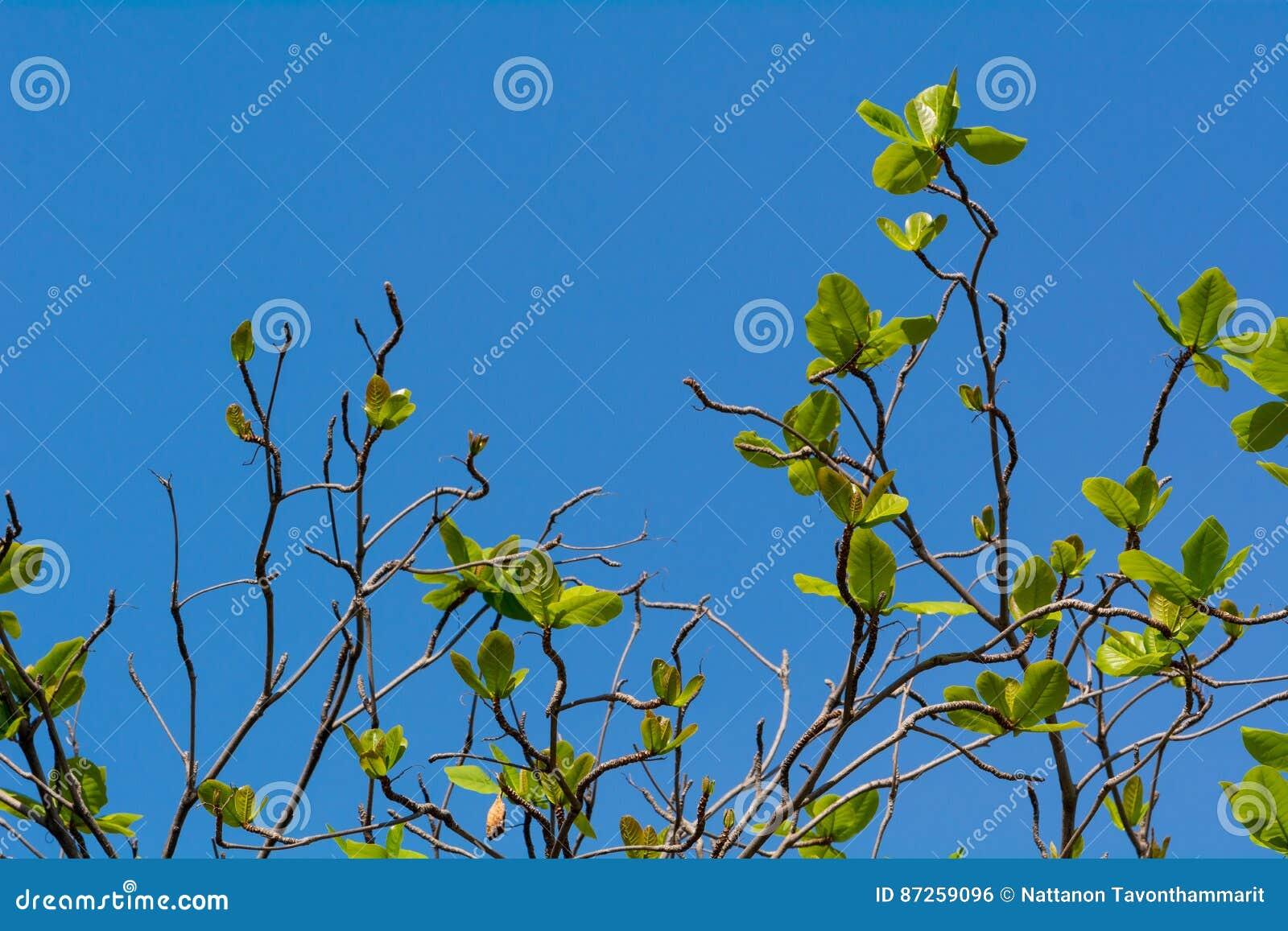 Δέντρο με τα νέα φύλλα