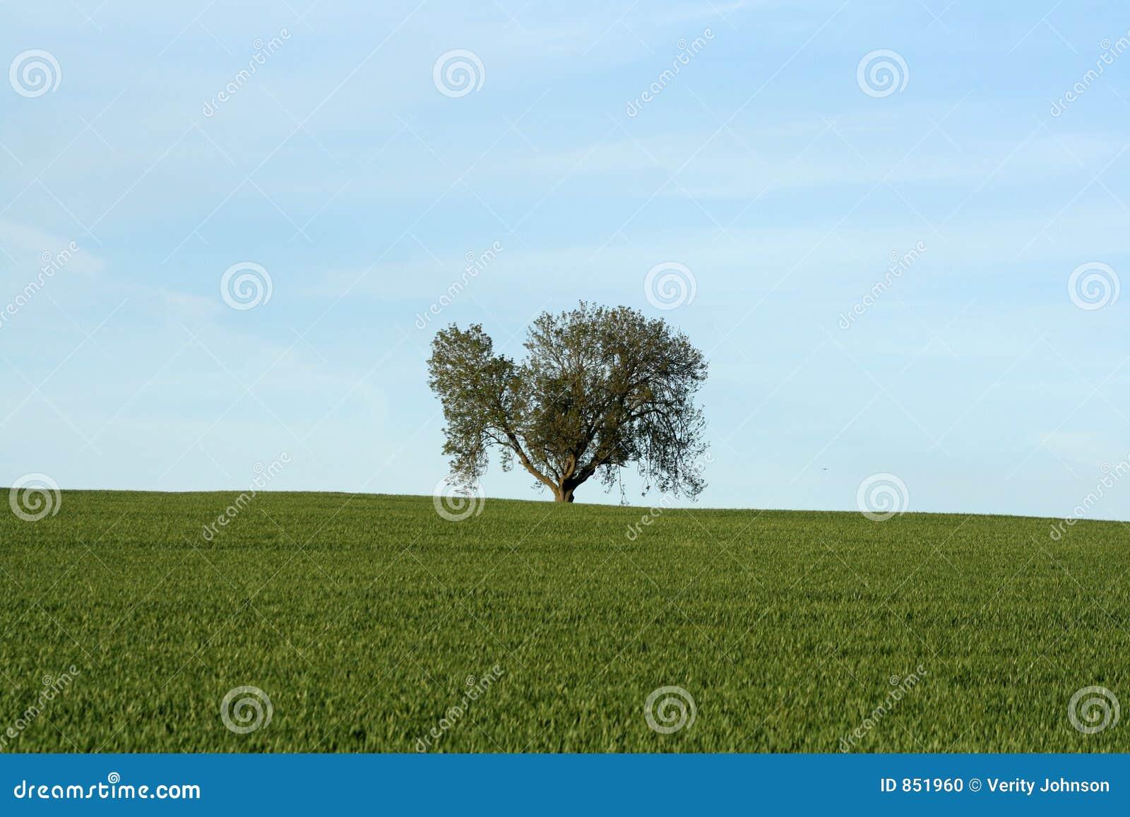 δέντρο οριζόντων