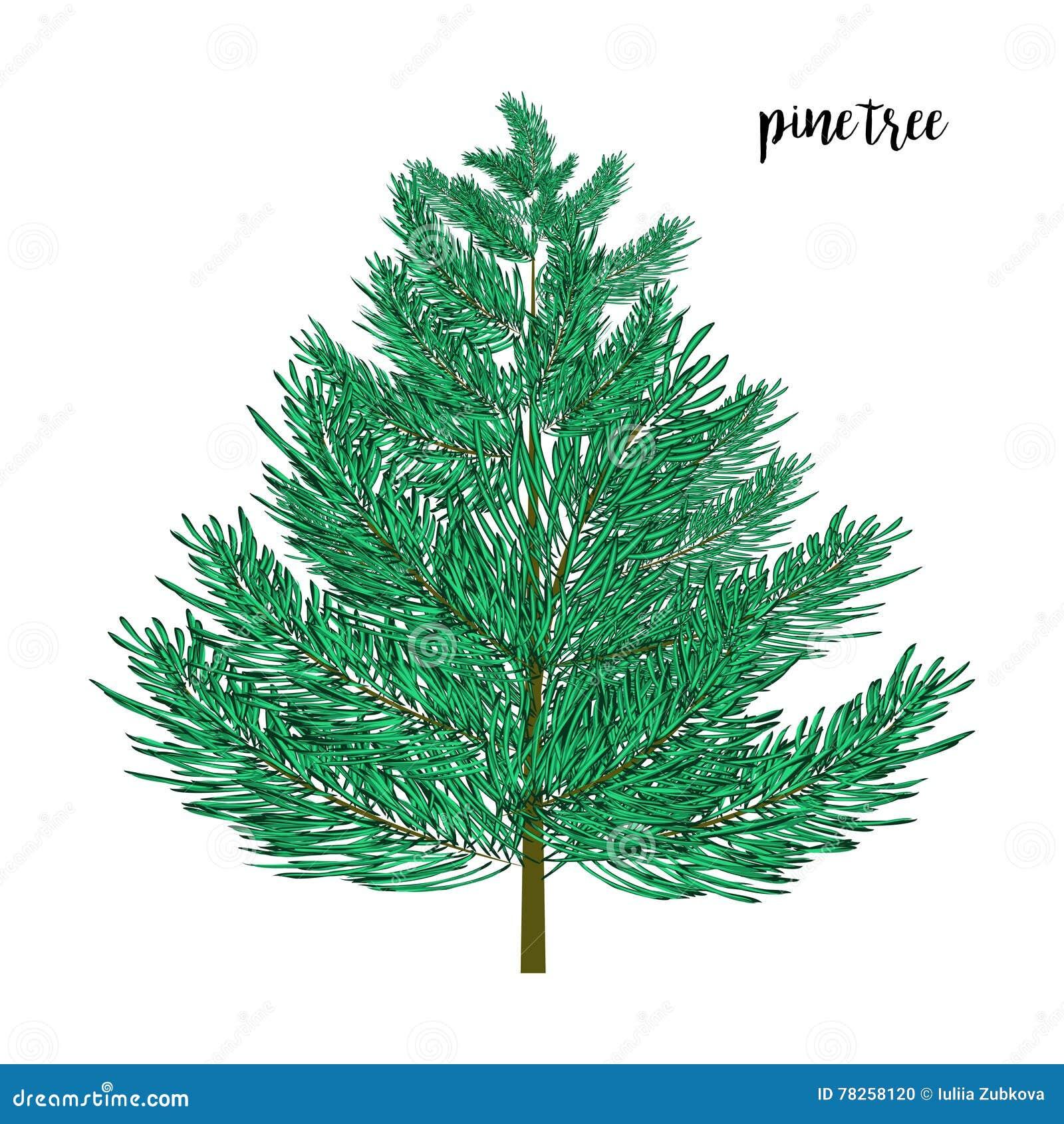 Δέντρο πεύκων που απομονώνεται στο wite επίσης corel σύρετε το διάνυσμα απεικόνισης