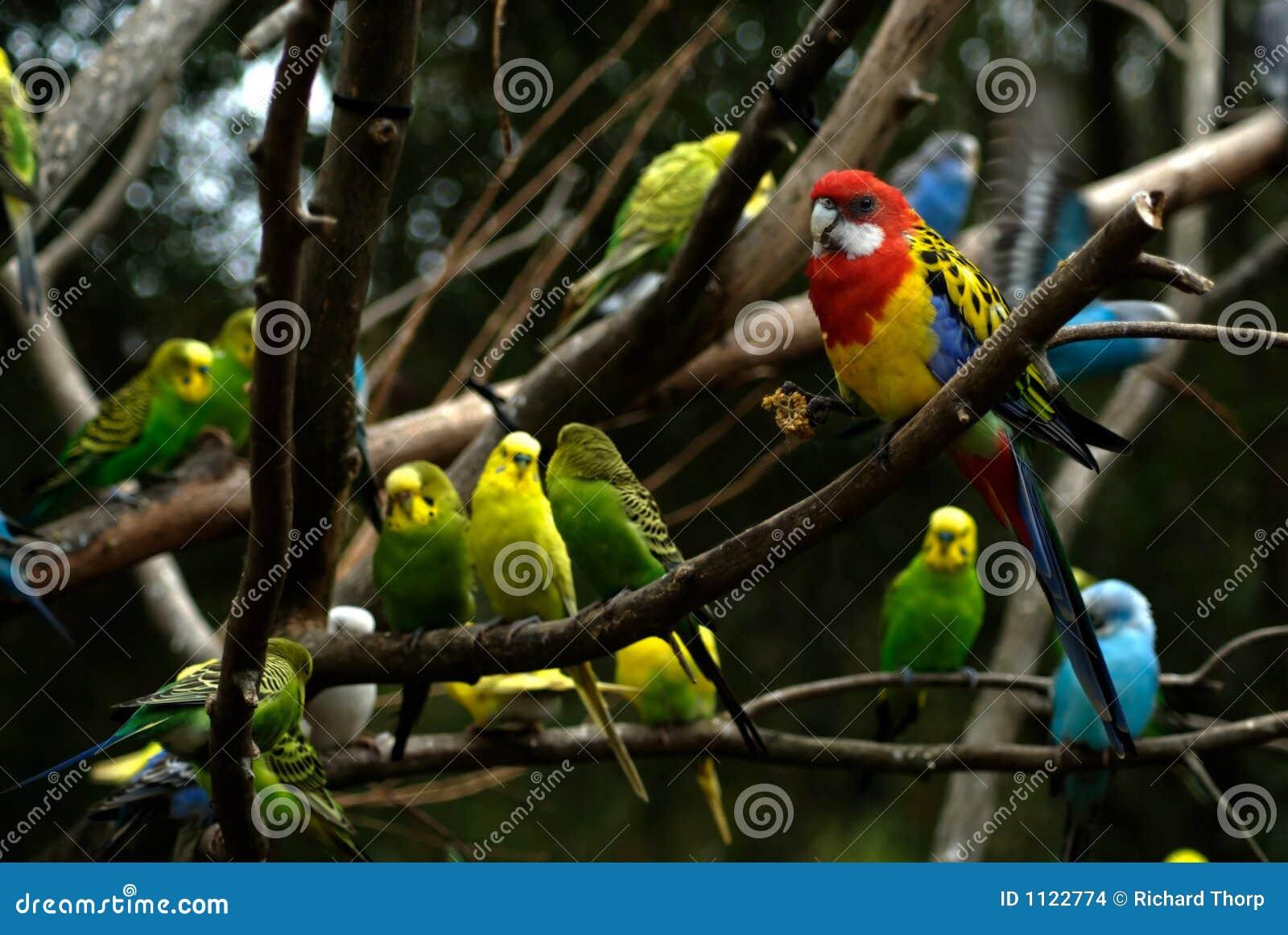 Bigblack πουλί σκατά
