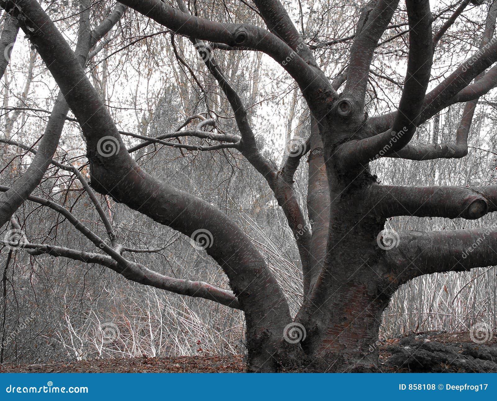 δέντρο που στρίβεται