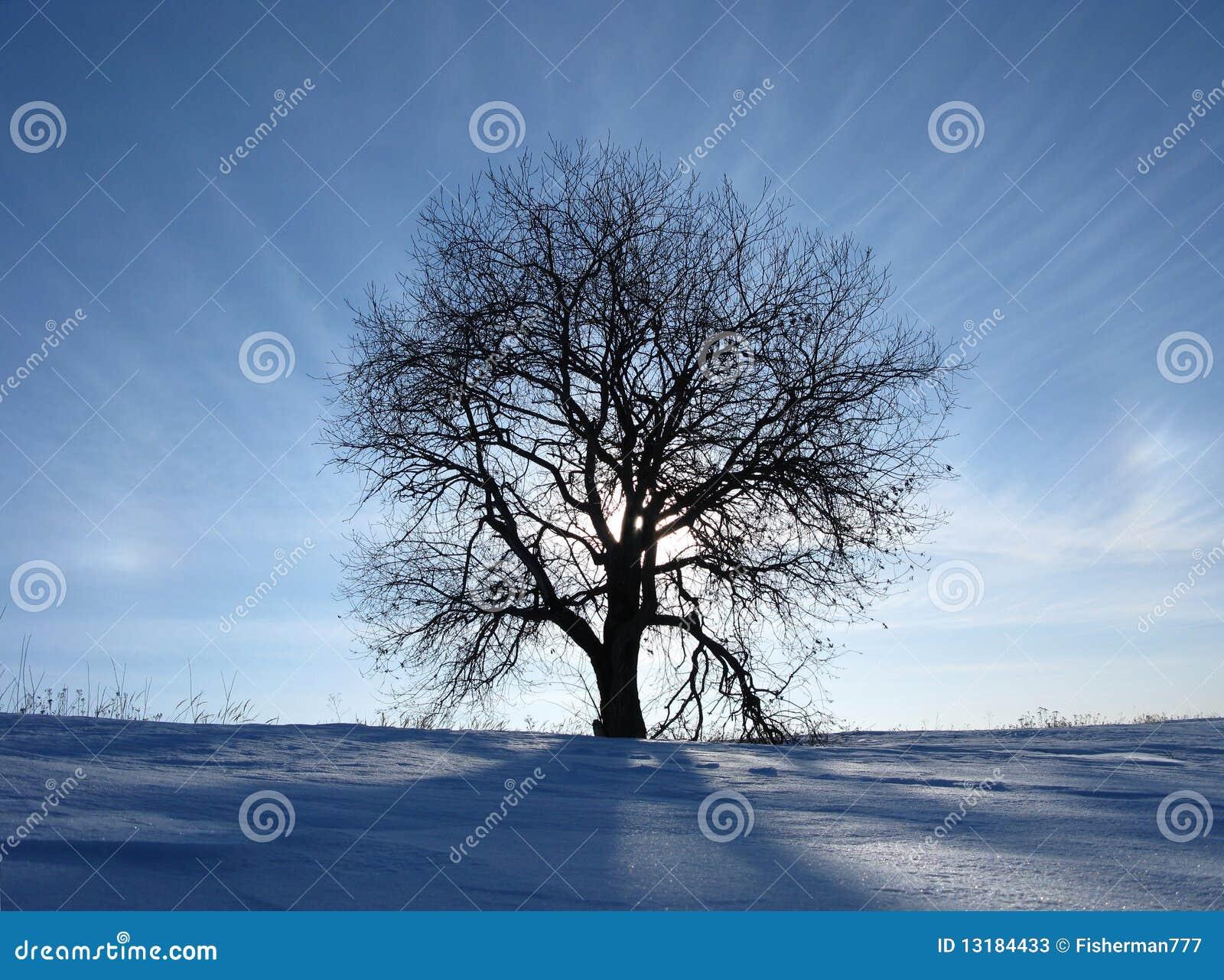 Δέντρο πυράκτωσης