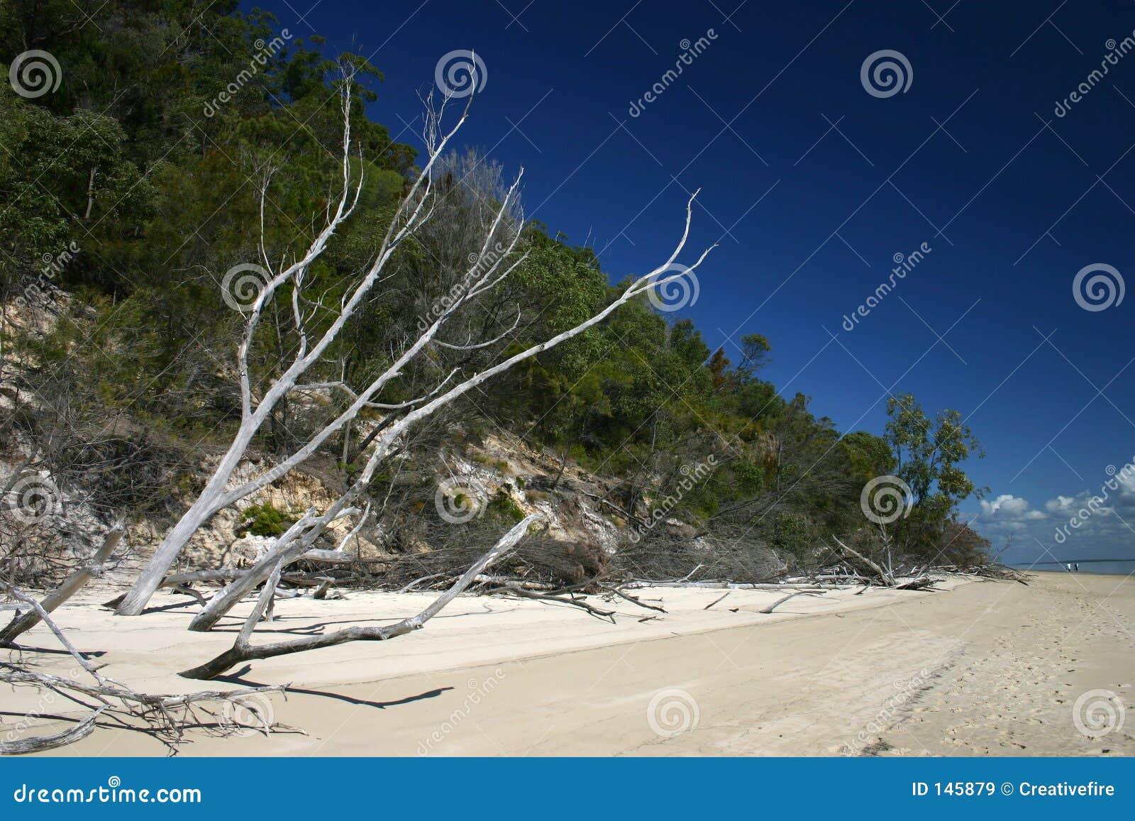 δέντρο σκελετών παραλιών