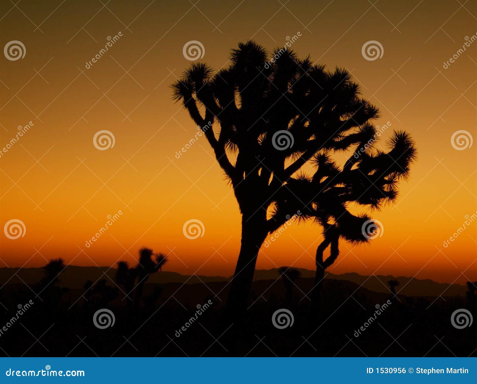 δέντρο σκιαγραφιών joshua