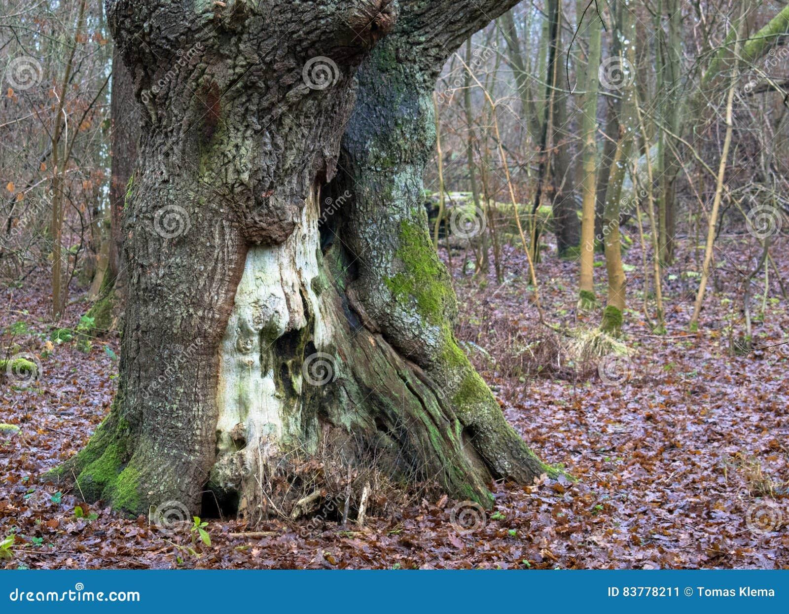 Δέντρο στο πάρκο