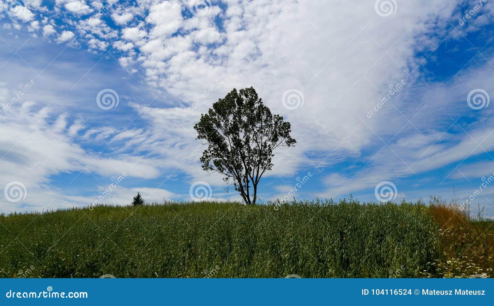 Δέντρο στο πεδίο