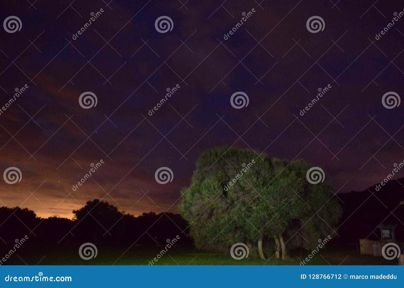 Δέντρο στο τέλος των ημερών
