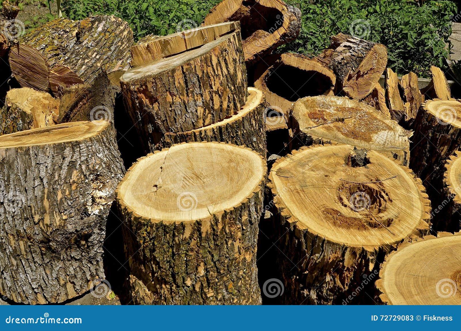 Δέντρο τέφρας που κόβεται στα τμήματα του μελλοντικού καυσόξυλου
