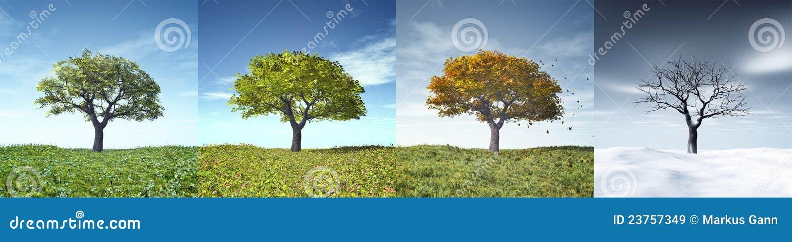 δέντρο τεσσάρων εποχών