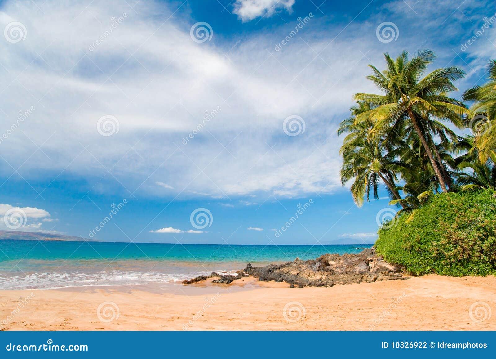 δέντρο της Χαβάης παραλιών pla