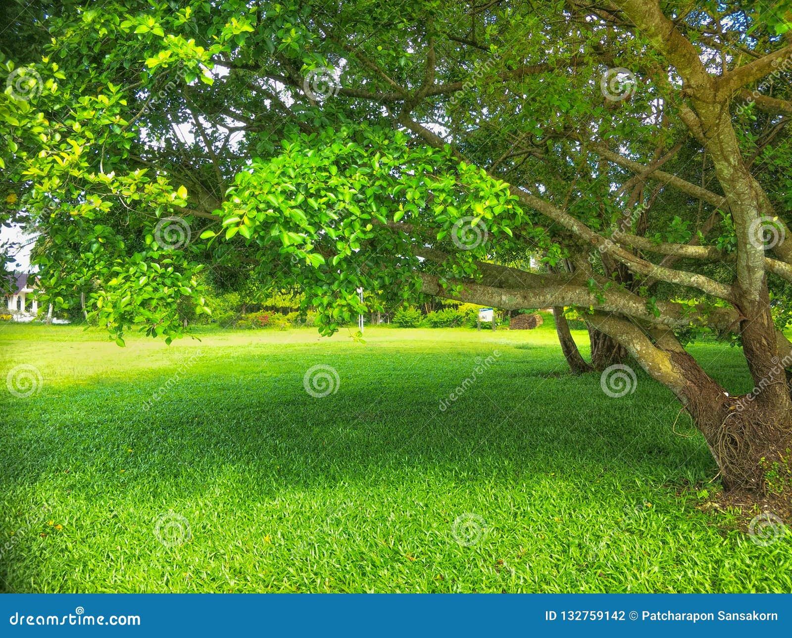 δέντρο τοπίου κήπων φθινοπώρου
