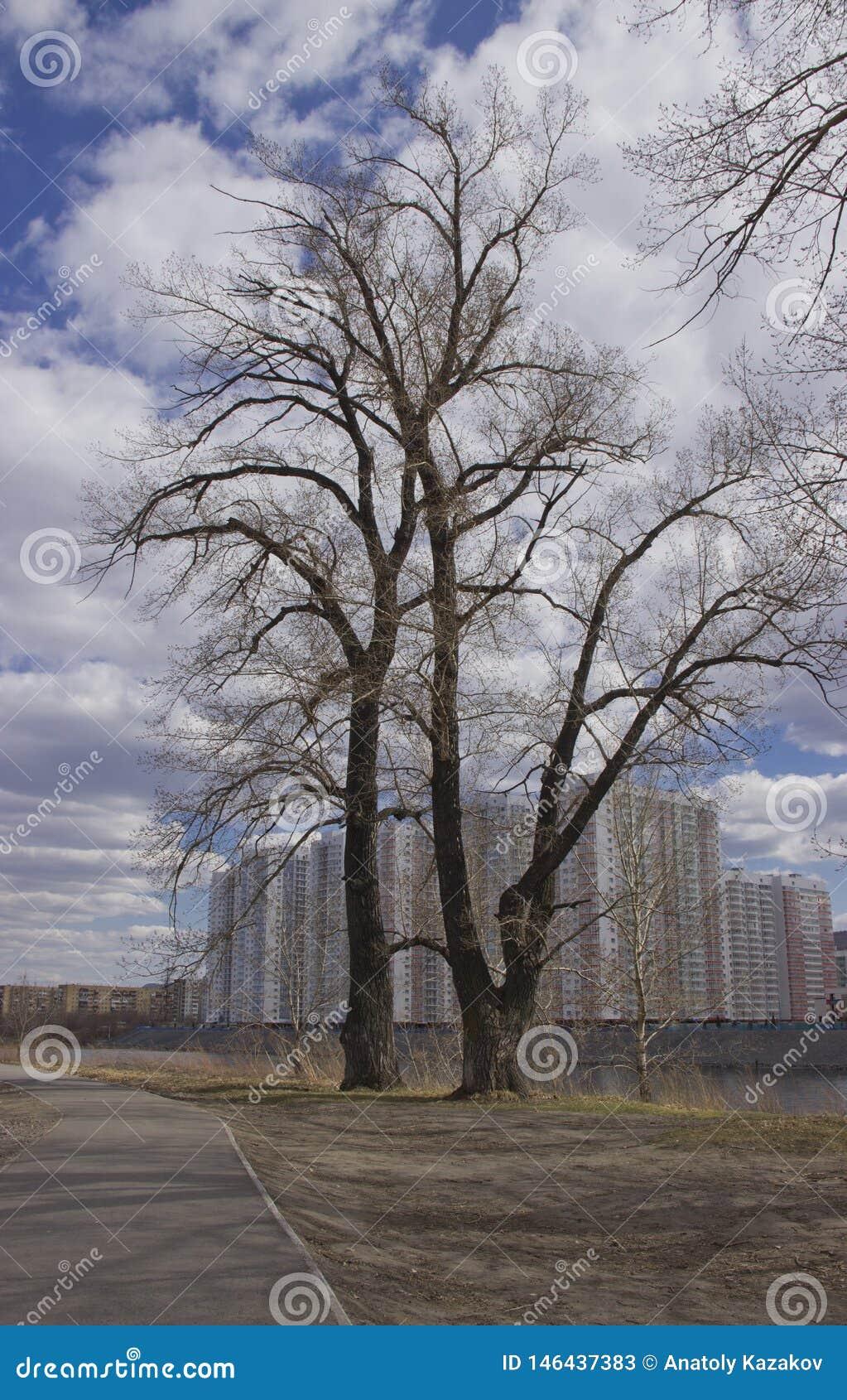 Δέντρο των πολυκατοικιών