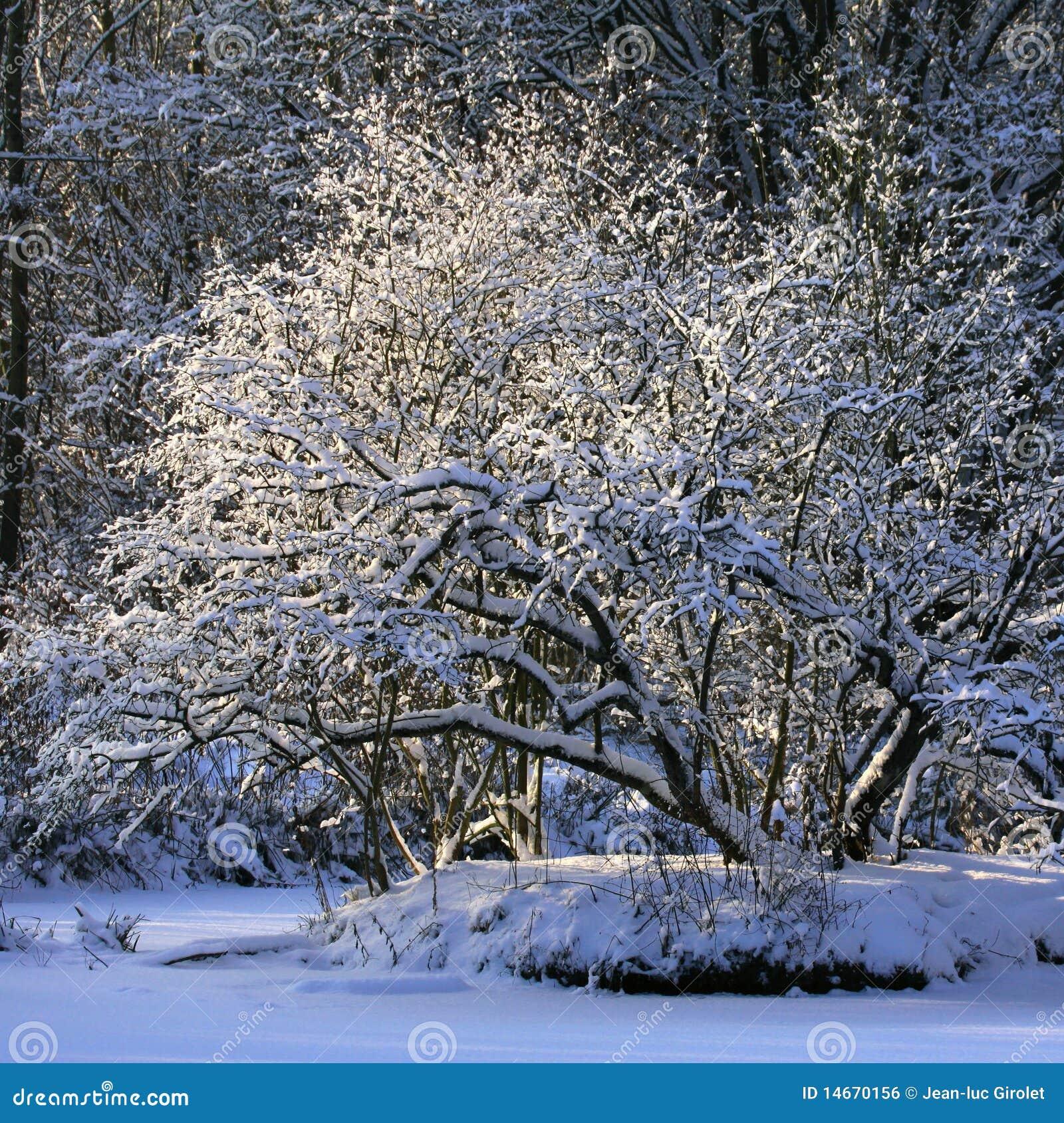 δέντρο χιονιού κάτω