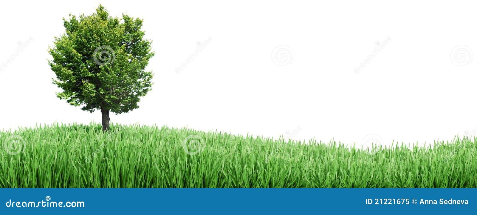 δέντρο χλόης