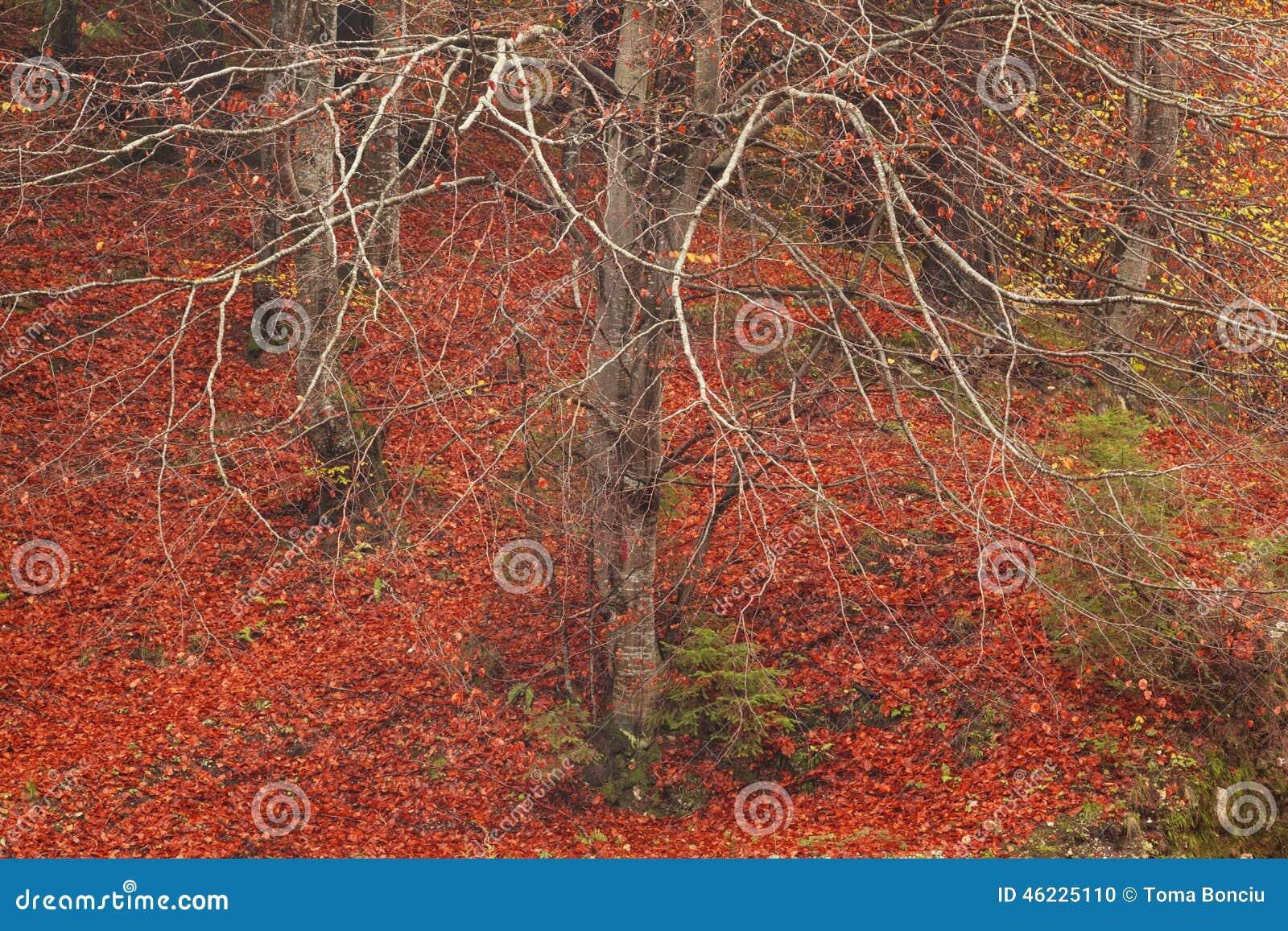 Δέντρο χωρίς τα φύλλα στα τέλη του φθινοπώρου