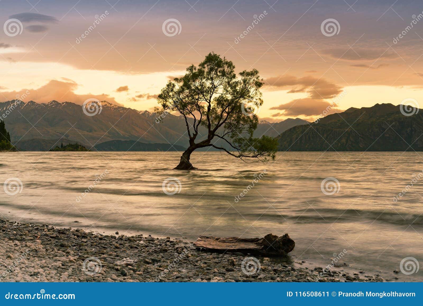 Δέντρο Wanaka μόνο στη λίμνη νερού, Νέα Ζηλανδία