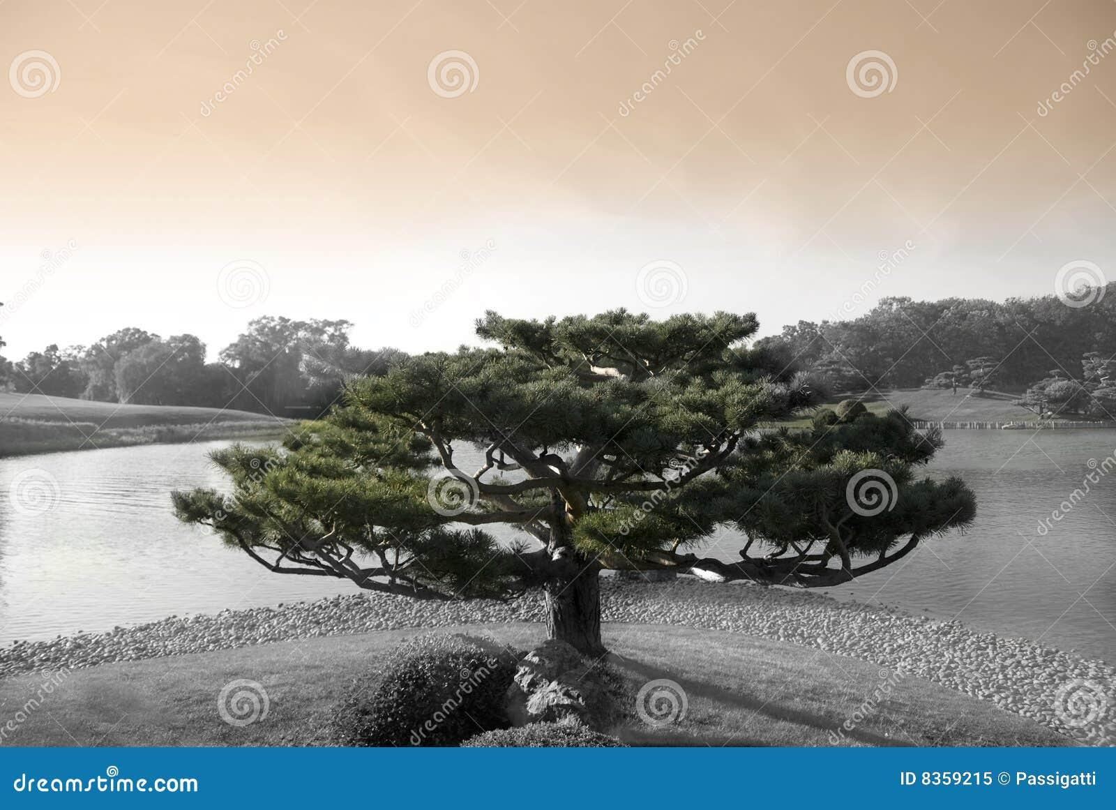 δέντρο zen