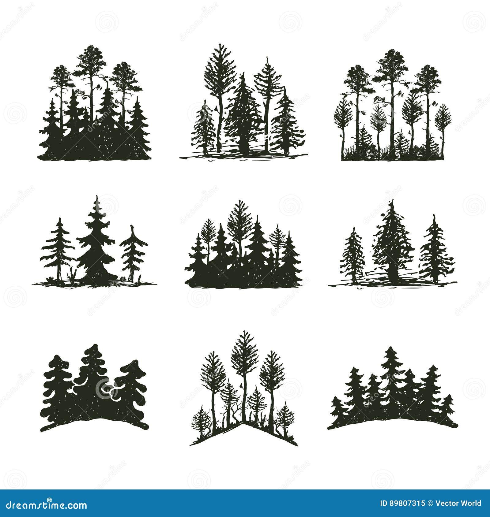 Δέντρων υπαίθριο κωνοφόρο φυσικό διακριτικό σκιαγραφιών ταξιδιού μαύρο, κομψοί κέδρος κλάδων ανώτατων πεύκων και περίληψη φύλλων