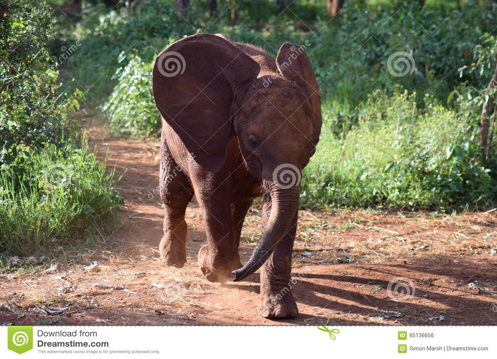 Δαπάνη ελεφάντων