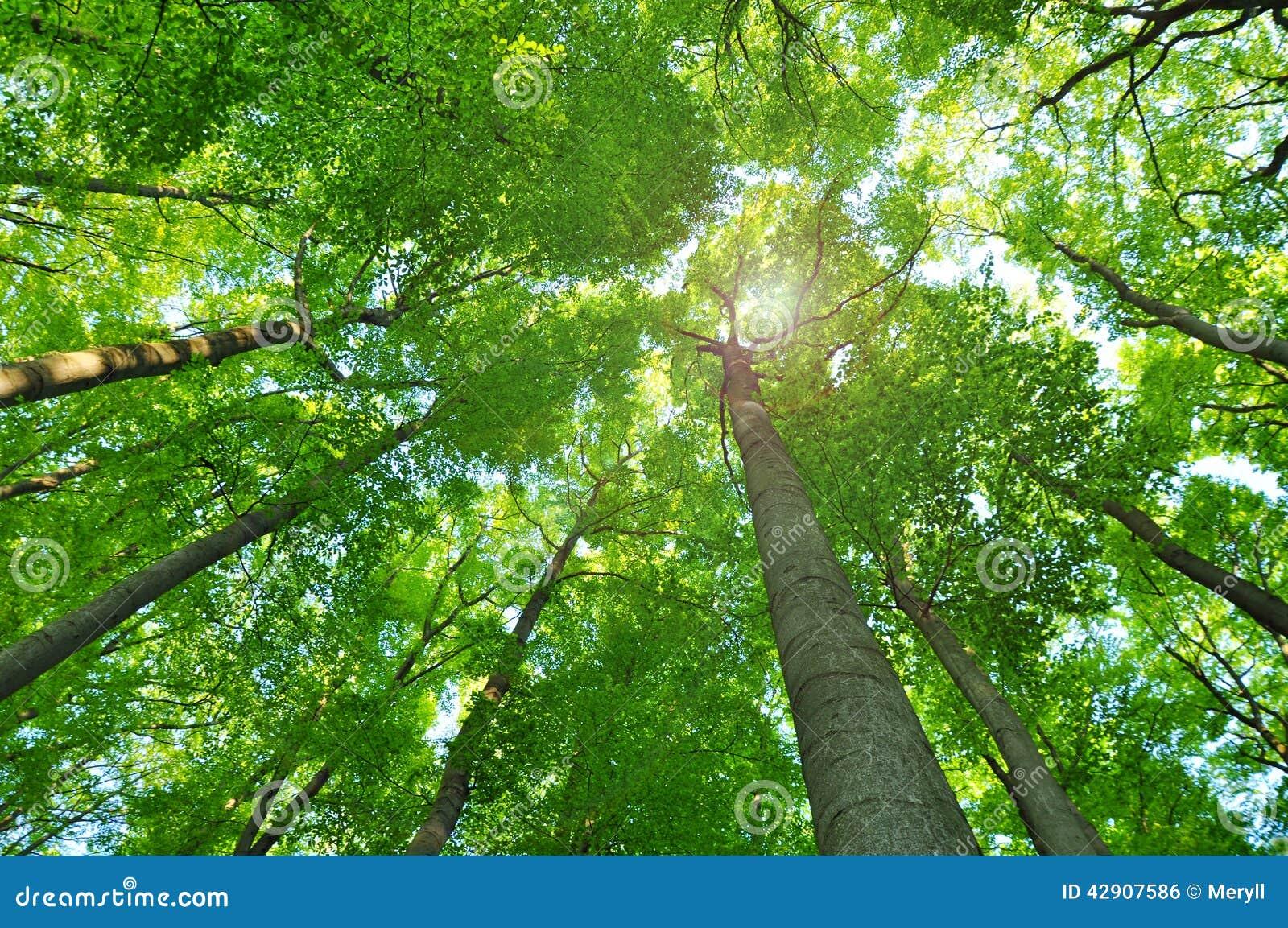 Δασικά δέντρα φύσης