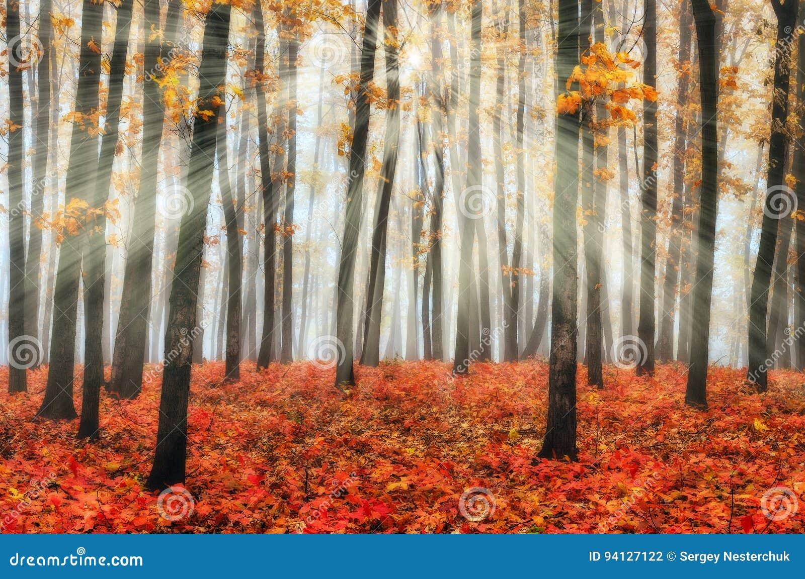 Δασικές ακτίνες ήλιων φθινοπώρου στο δάσος