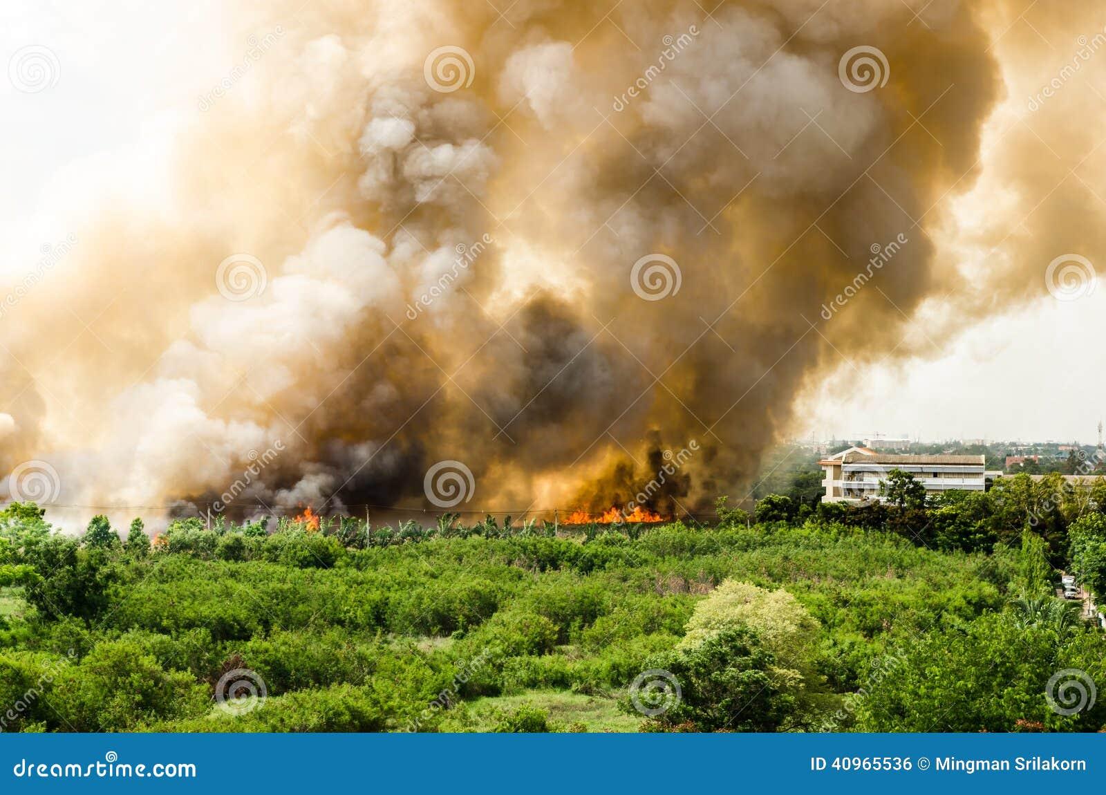 Δασικές πυρκαγιές στην πόλη σε μια καυτή υπερβολική παροχή Πυροσβέστης που ενισχύεται να επιταχύνει να αποτρέψει την πυρκαγιά που