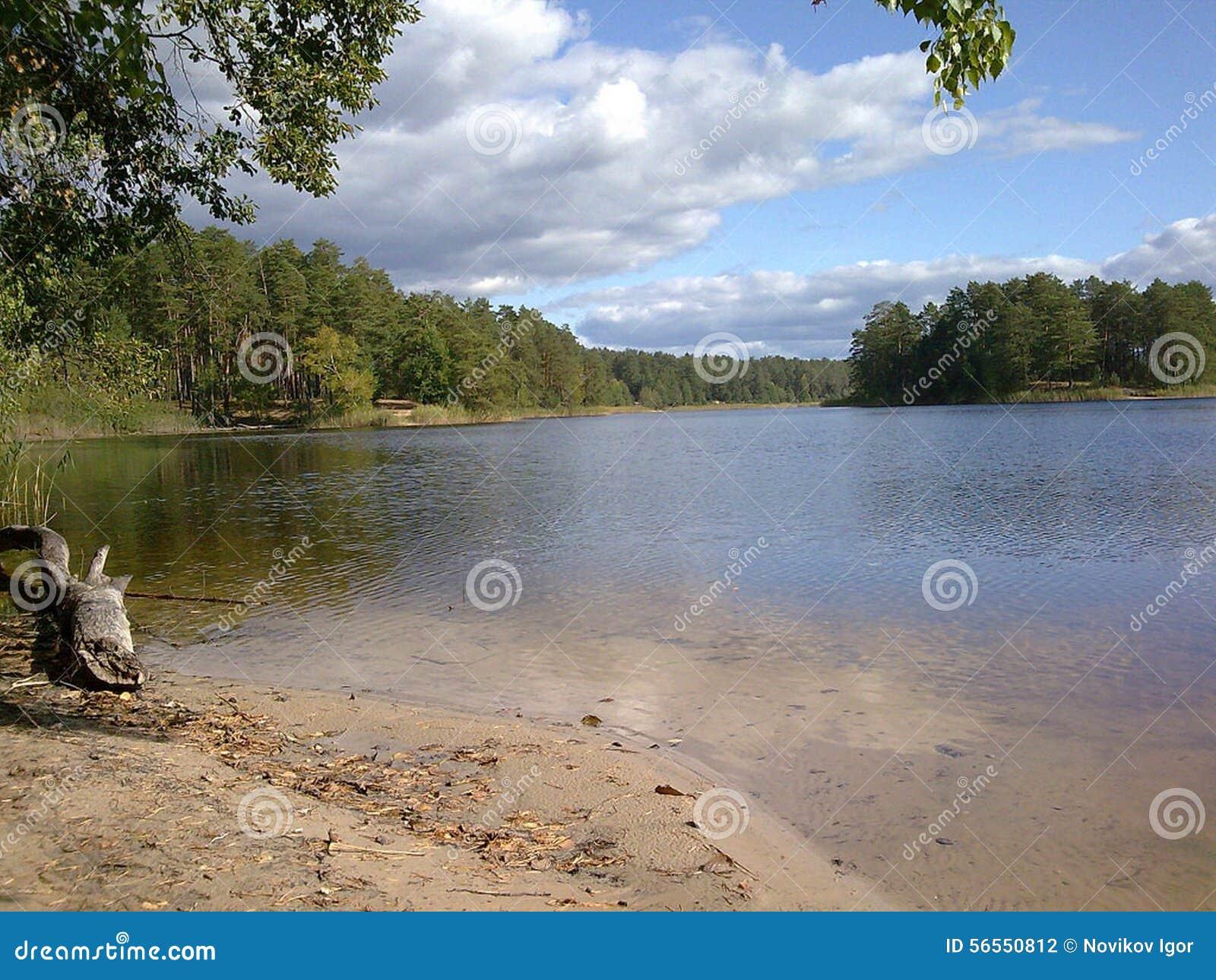 Download Δασική λίμνη στοκ εικόνες. εικόνα από λίμνη, ουρανός - 56550812