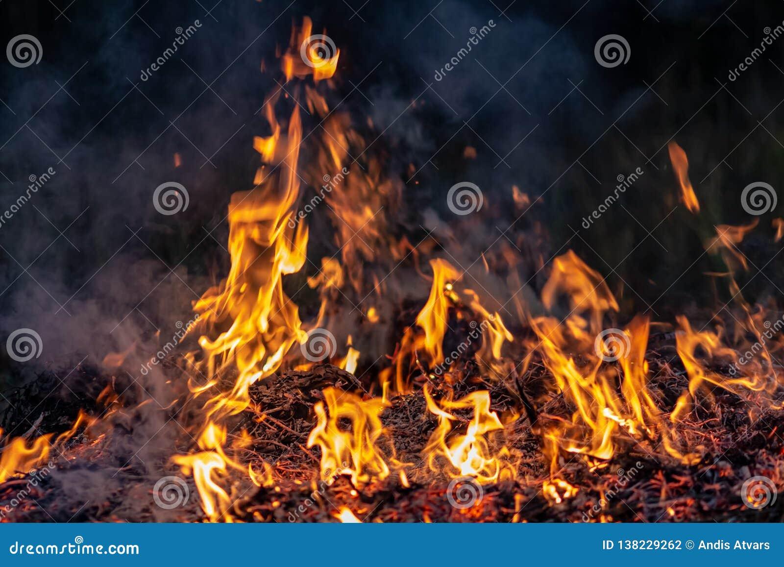 Δασική ολόκληρη περιοχή πυρκαγιών τη νύχτα που καλύπτεται από τη φλόγα και τα σύννεφα του σκοτεινού καπνού Διαστρεβλωμένος οφειλό