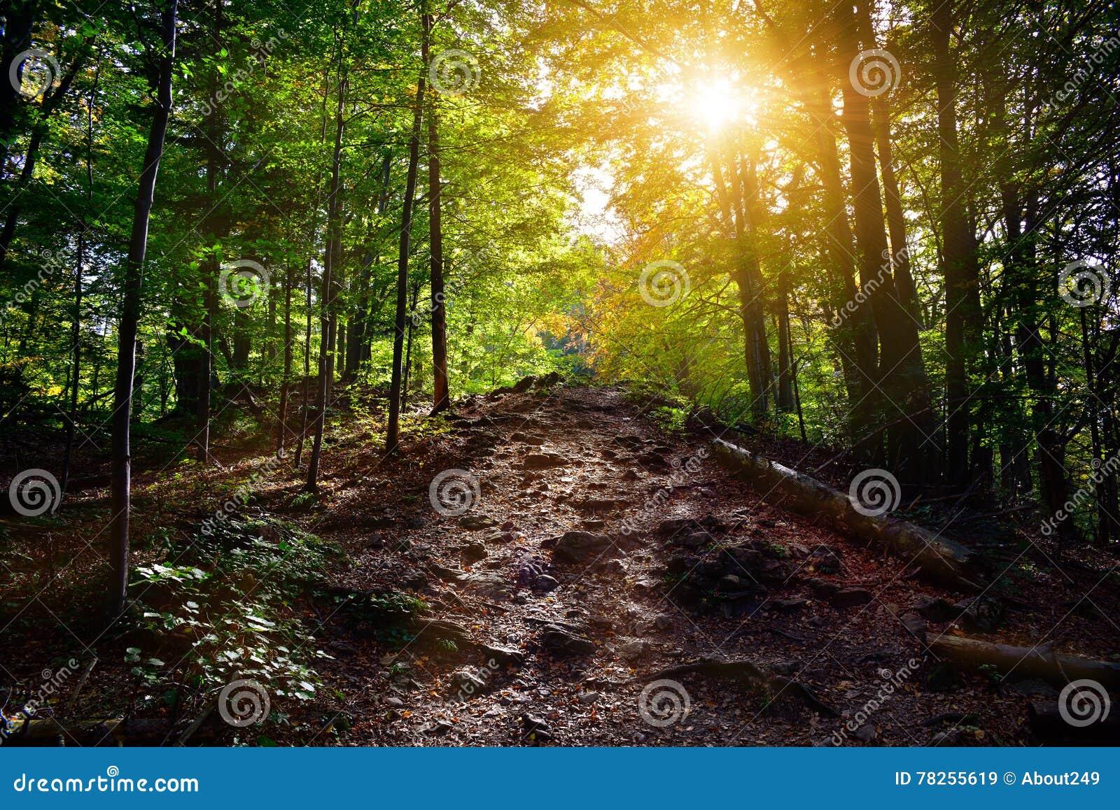 Δασική πορεία στις ακτίνες ήλιων φθινοπώρου