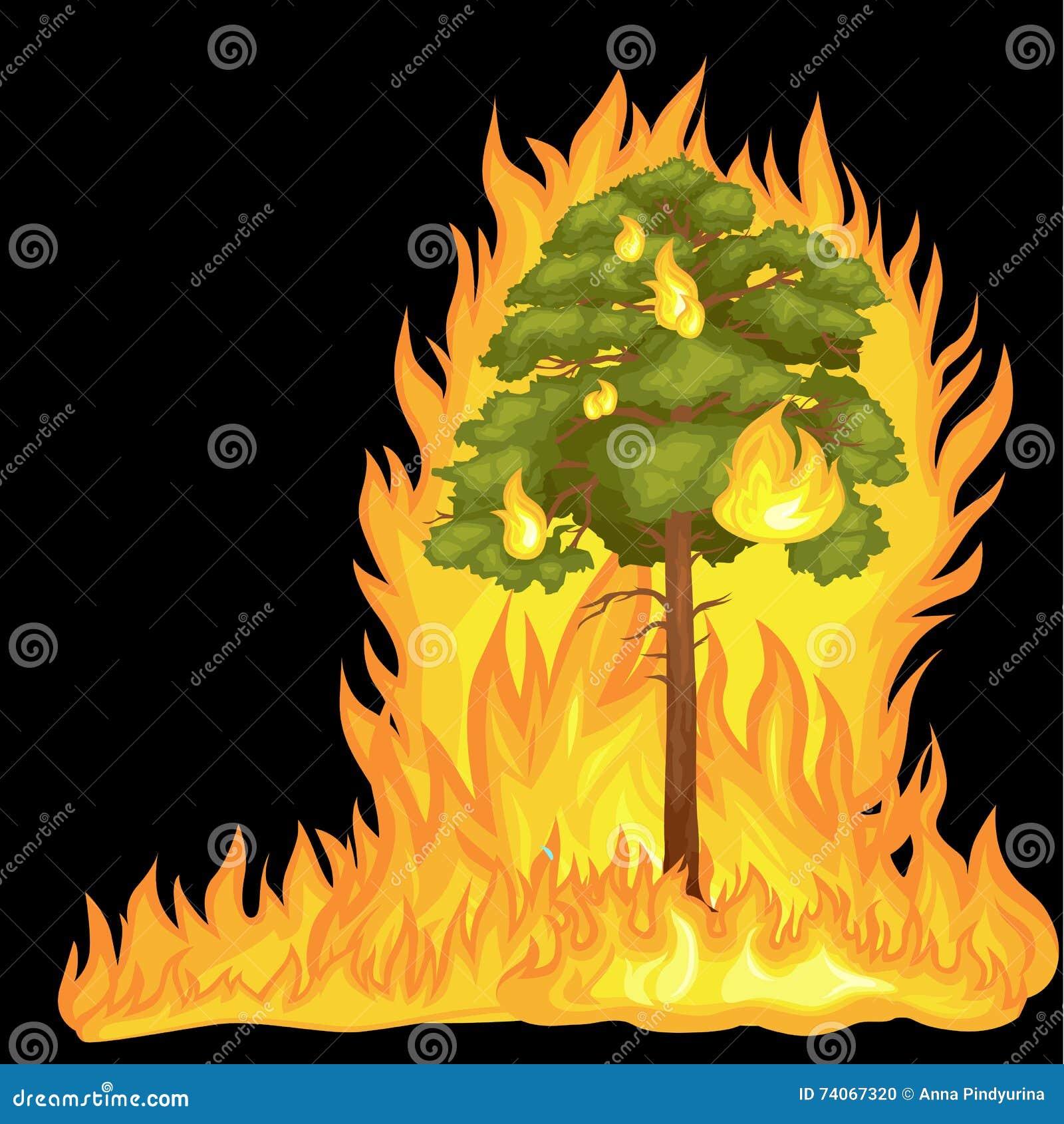 Δασική πυρκαγιά, πυρκαγιά στη δασική ζημία τοπίων, καταστροφή οικολογίας φύσης, καυτά καίγοντας δέντρα, φλόγα δασικής πυρκαγιάς κ