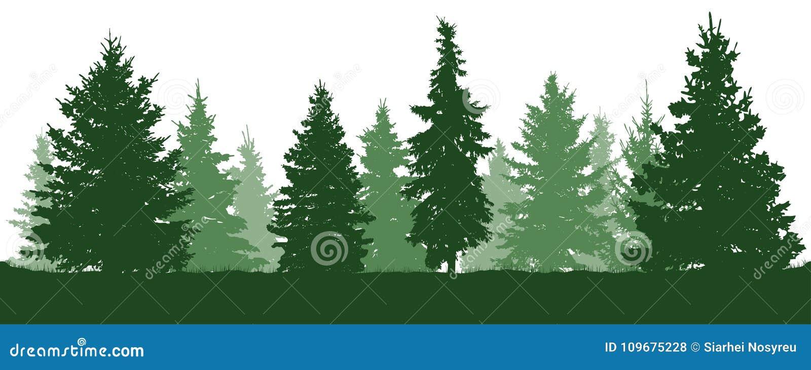 Δασική σκιαγραφία δέντρων έλατου Κωνοφόρες πράσινες ερυθρελάτες Διάνυσμα στο άσπρο υπόβαθρο