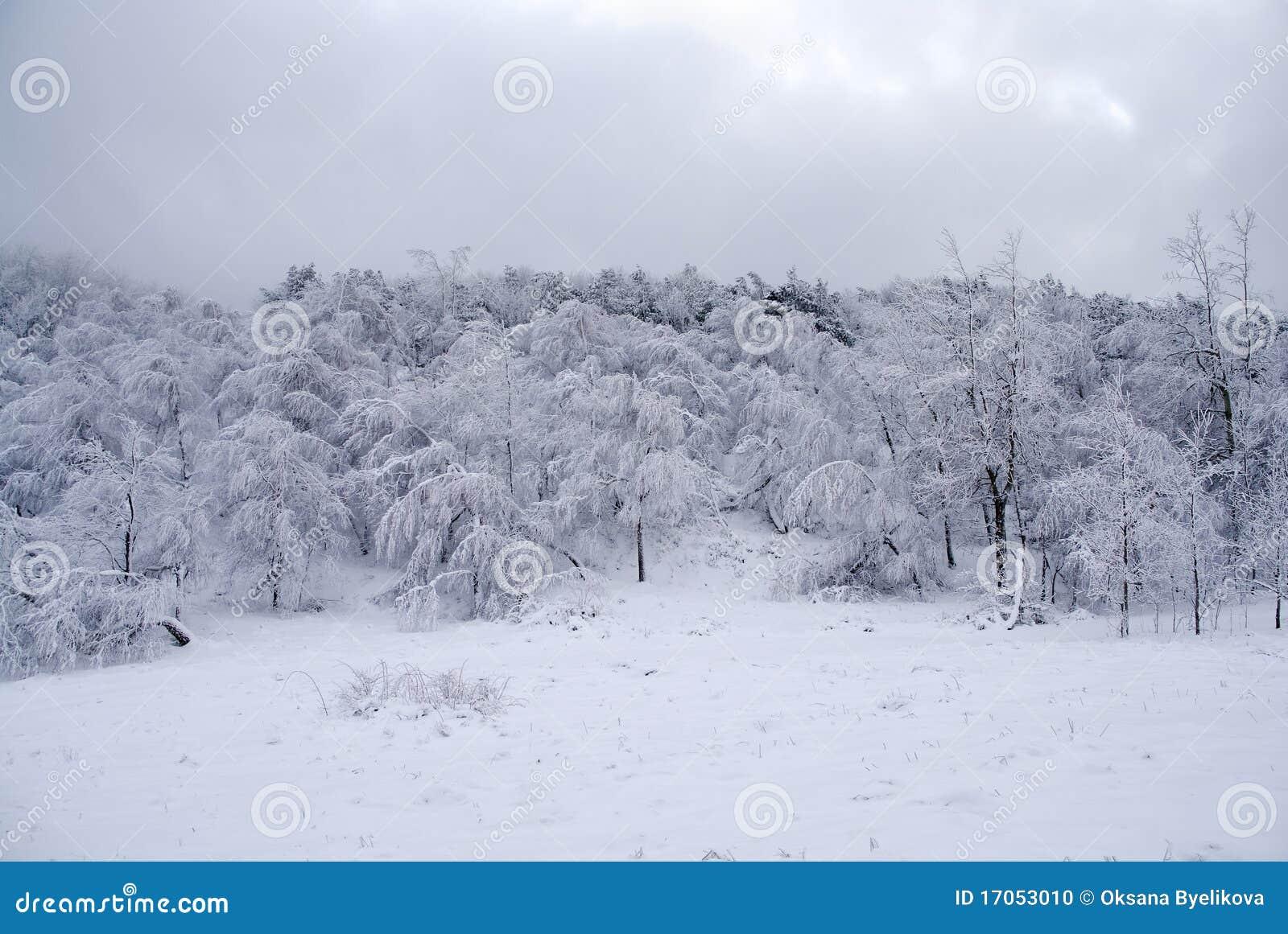 δασικός παγωμένος χειμών&alph