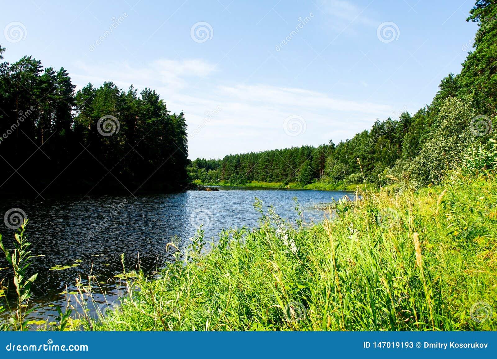 Δασικός ποταμός μια καυτή θερινή ημέρα