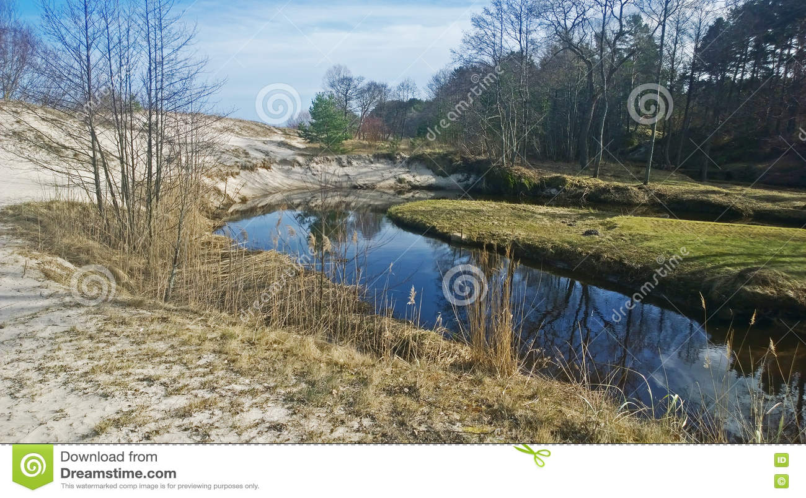 Δασικός ποταμός