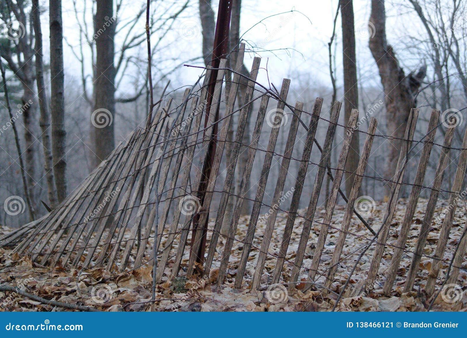 Δασικός φράκτης που πέφτει με τα δέντρα στο υπόβαθρο