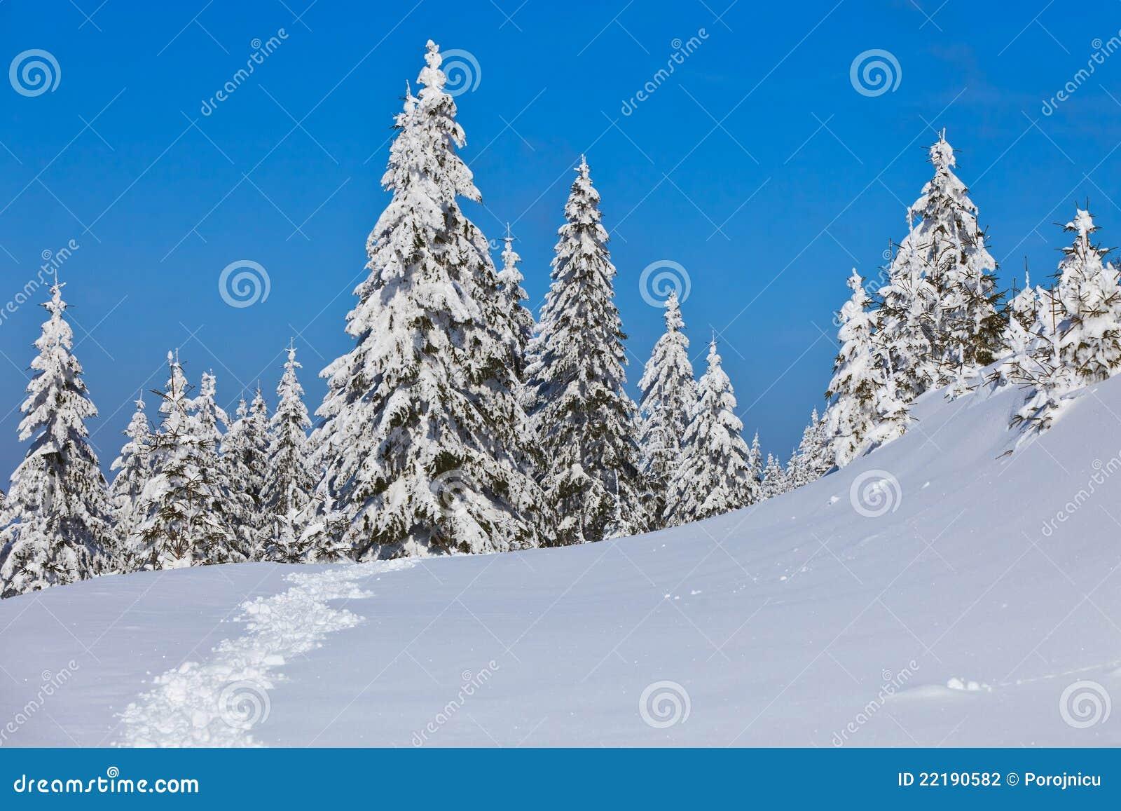 δασικός χειμώνας πεύκων