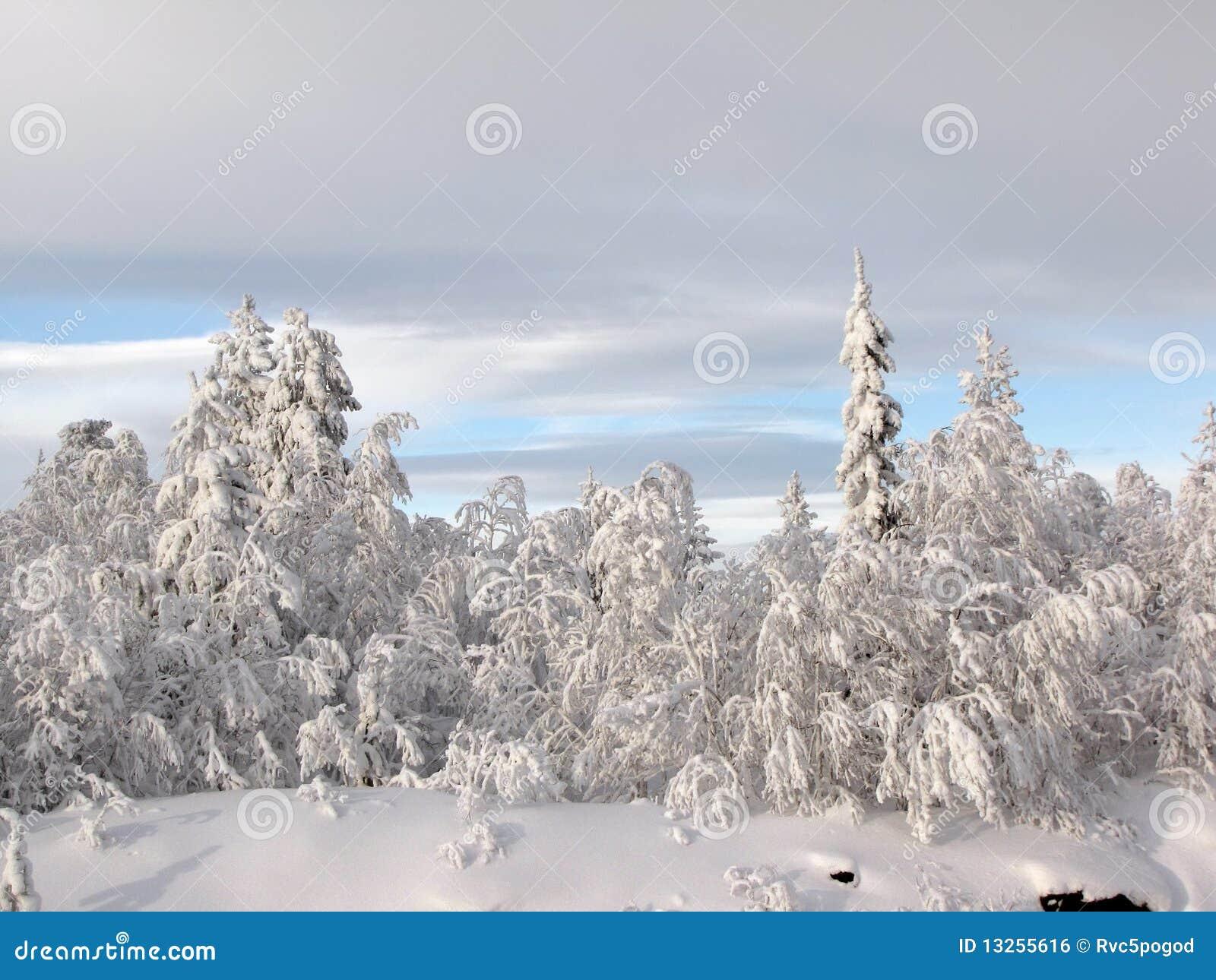 δασικός χειμώνας