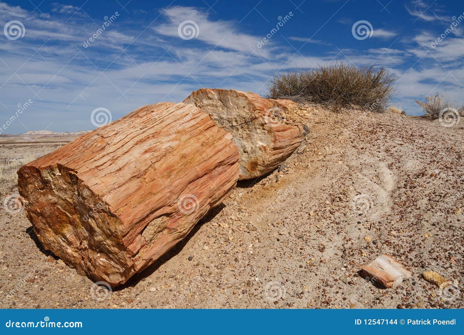δασικό εθνικό πετρώνω πάρκ&omicr